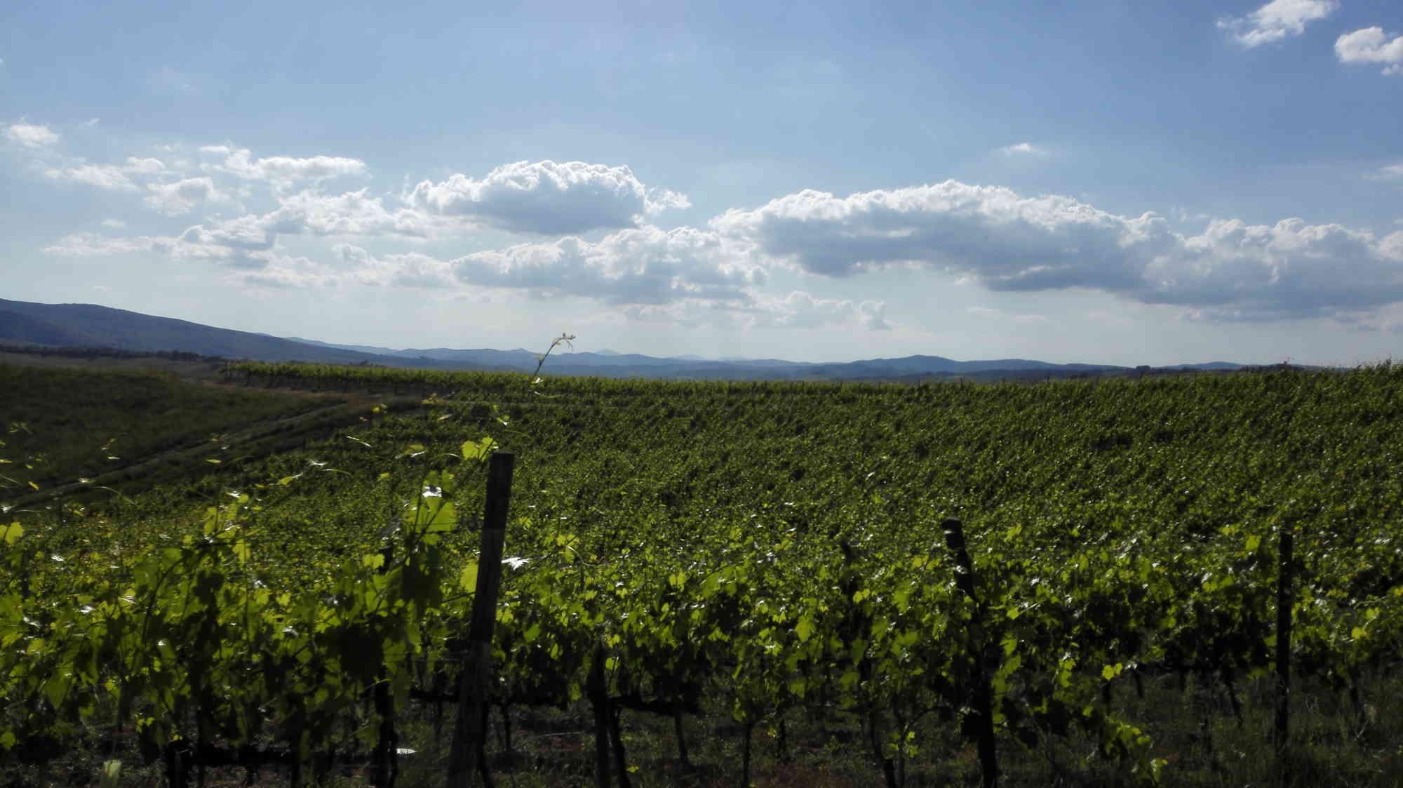 montalcino le nostre vigne